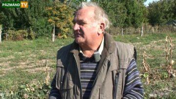 Rekord méretű tökök a pázmándi szőlőhegyen – 2013. HD